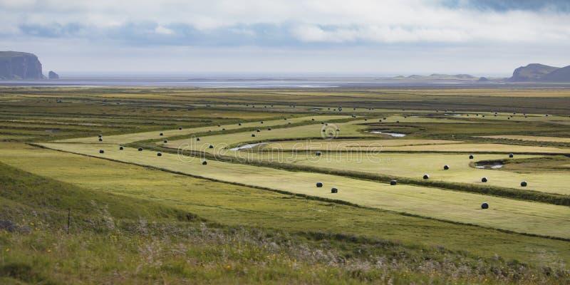 Geerntetes Wiesenfeld in Island zur Sommerzeit stockbild