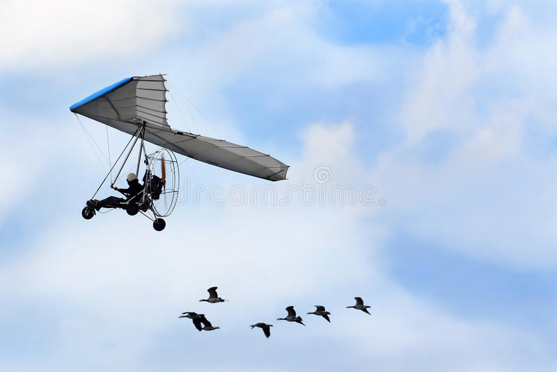 Download Geese stock photo. Image of black, airplane, canada, blue - 9951112