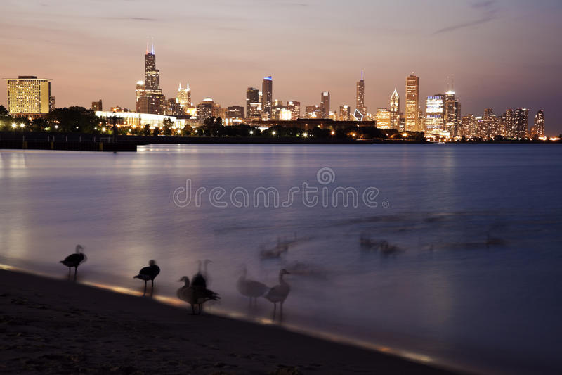 Download Geese on the beach stock image. Image of office, goose - 26919443