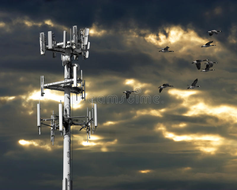 Geese And Communications Tower stock photos