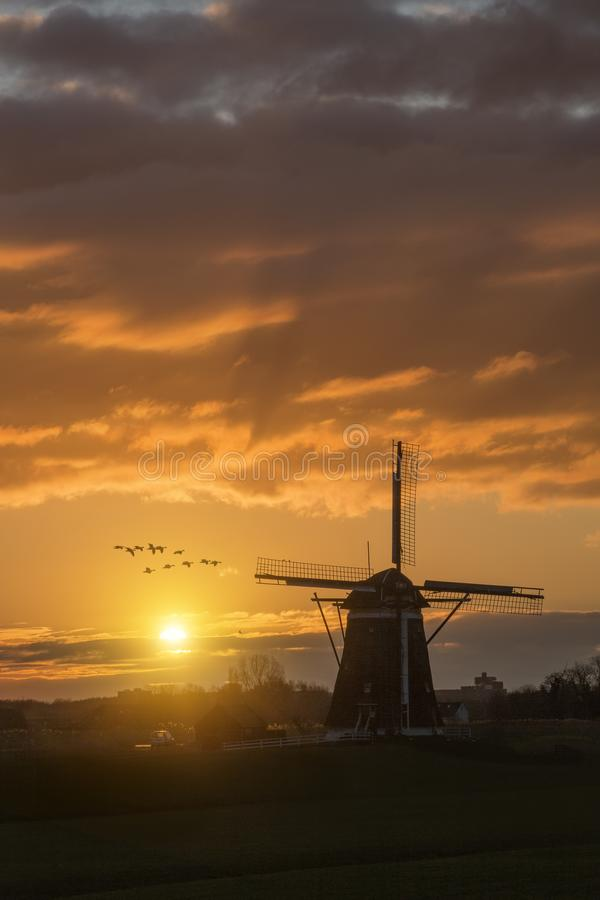 Geese flying against the sunset on the Dutch windmill royalty free stock image