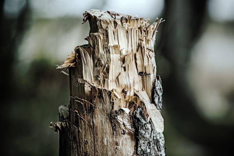 Gefällter Baum stockbild