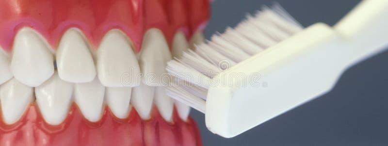 Gefälschte Zähne und Zahnbürste lizenzfreie stockbilder
