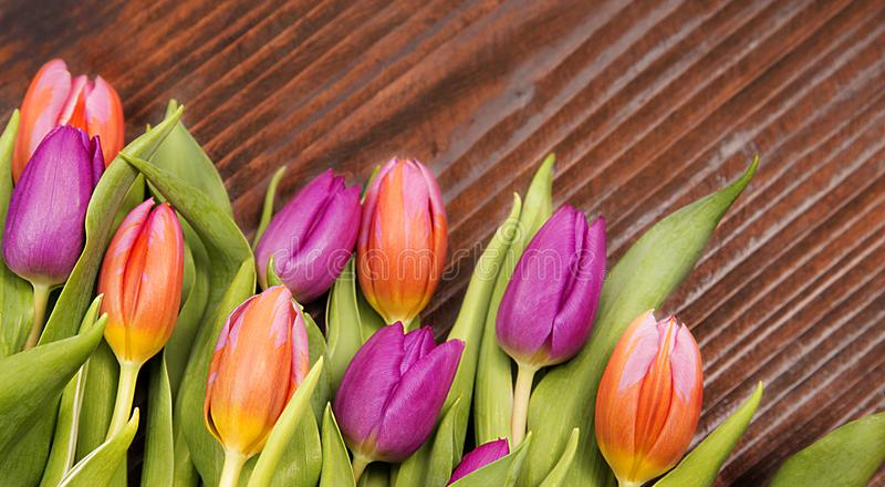 Gefühlsfrühling, farbige Tulpen stockfoto