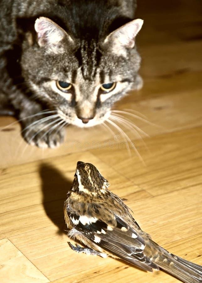 Gefahren-Katze und Vogel lizenzfreie stockfotografie