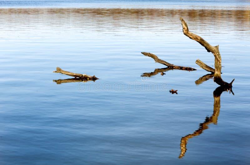 Gefallene Bäume im Wasser lizenzfreies stockbild