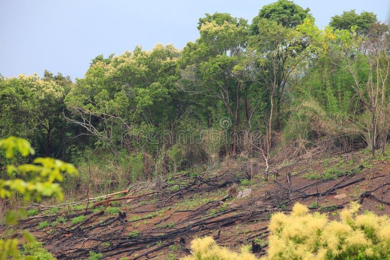 Gefallene Bäume infolge der illegalen Protokollierung und der Abholzung für die Landwirtschaft im Regenwald von Thailand stockfotografie