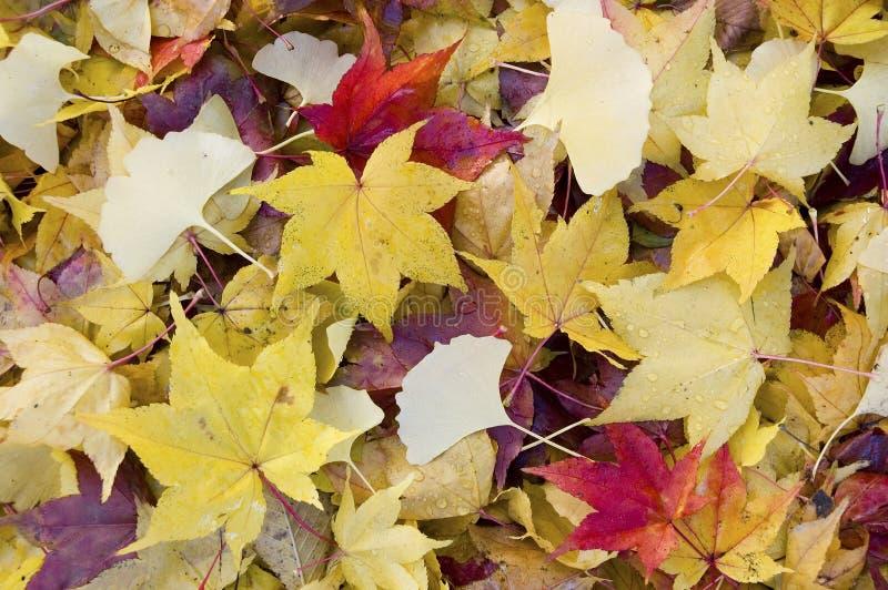 Gefallene Blätter stockbild