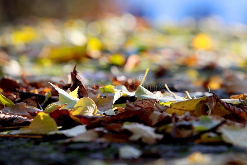 Gefallene Blätter auf einem unscharfen Hintergrund und niemandem herum lizenzfreies stockfoto