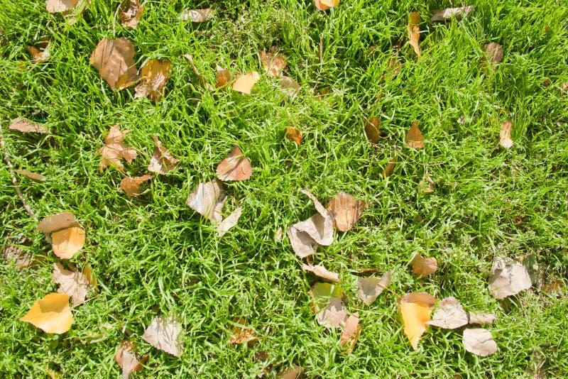 Gefallene Blätter auf Gras stockbilder