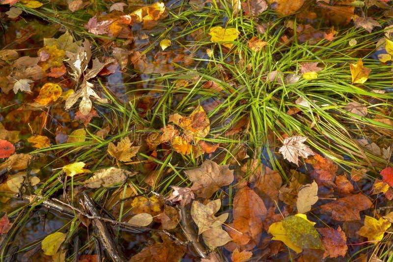 Gefallene Blätter auf Waldboden stockfotografie