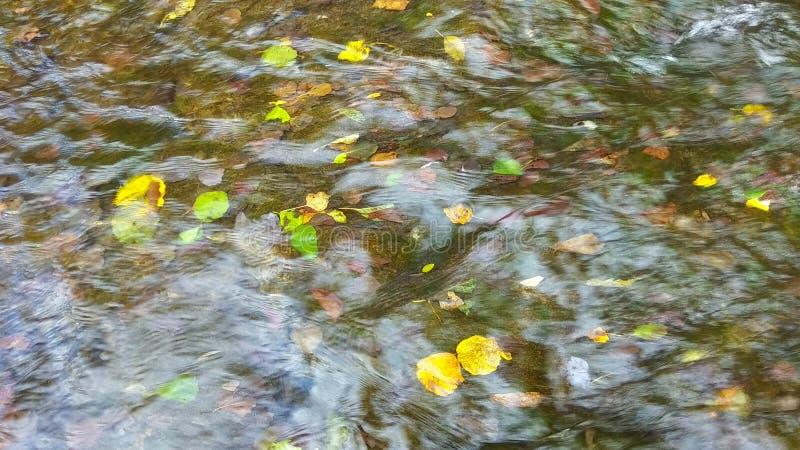 Gefallene Blätter an der Unterseite von einem Gebirgsfluss lizenzfreies stockfoto