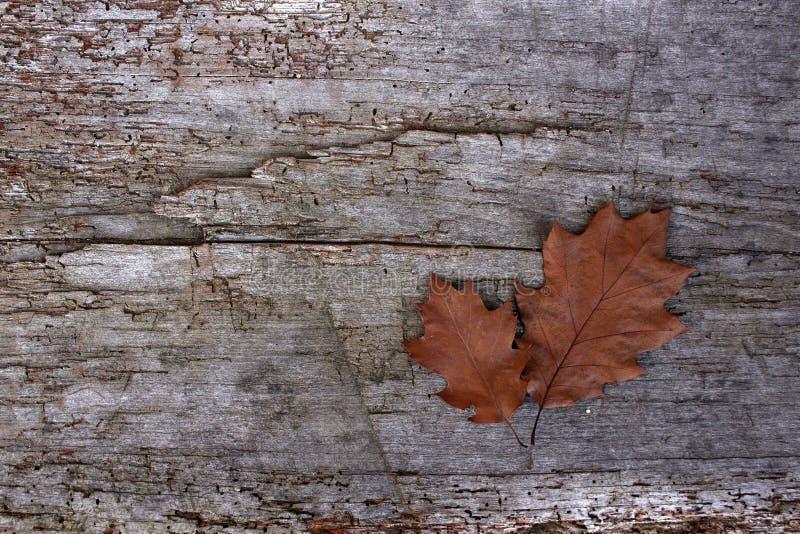 Gefallene Blätter im Herbst Raum zu schreiben Hölzerne Tabelle Hintergrund lizenzfreie stockfotografie