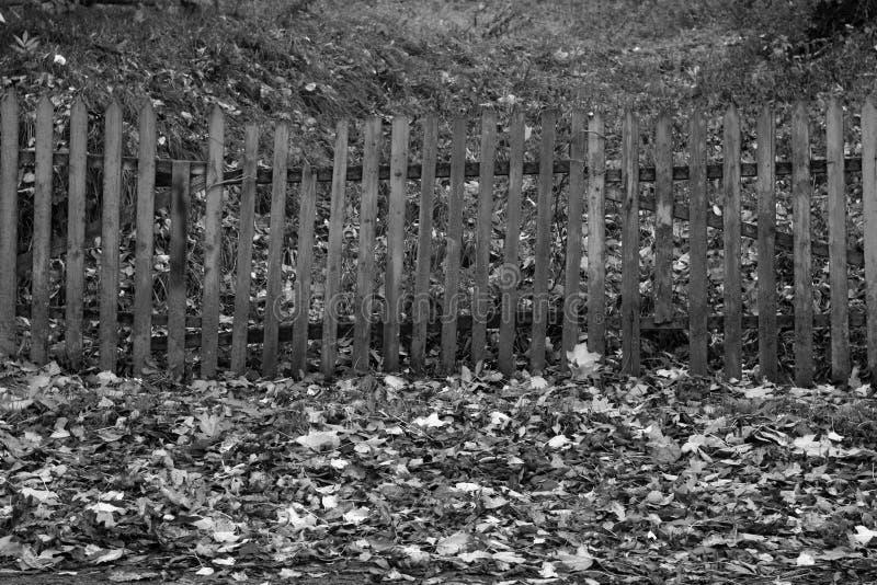 Gefallene Blätter und alter Bretterzaun in Schwarzweiss lizenzfreies stockbild