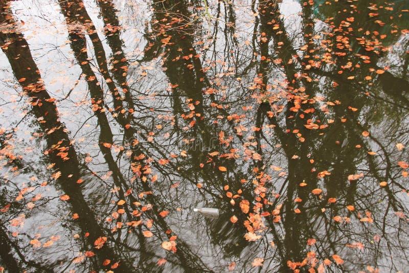 Gefallene Blätter und Reflexion der Bäume im See lizenzfreies stockbild