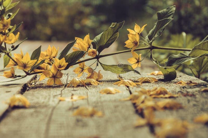 Gefallene Blume lizenzfreie stockfotos