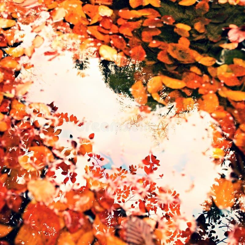 Gefallene Buchenleves und -steine im Wasser von Gebirgsfluss, erste bunte Blätter brüllen SpiegelWasserspiegel lizenzfreies stockfoto