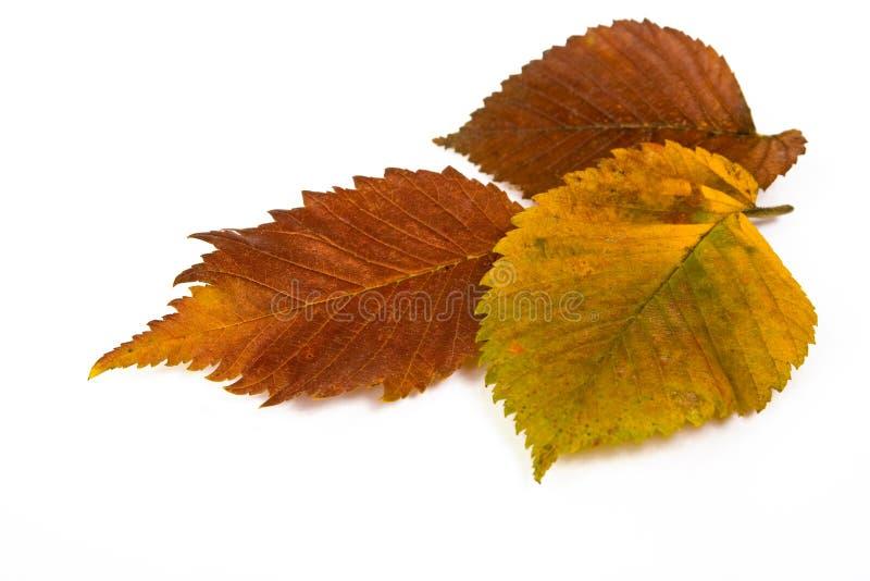 Gefallene Herbstblätter stockbild