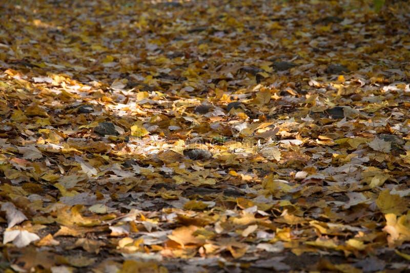 Gefallene Herbstblätter lizenzfreie stockbilder
