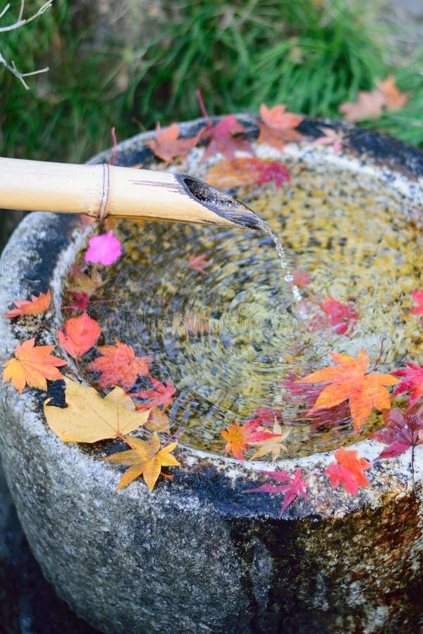Gefallene japanische Herbstahornblätter u. flüssiges Wasser vom Bambusrohr lizenzfreie stockbilder