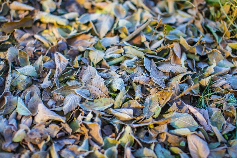Gefallene trockene Blätter mit Reif, natürlicher Draufsichthintergrund der Zusammenfassung Gefrorenes Laub aus den Grund Erster F stockbild