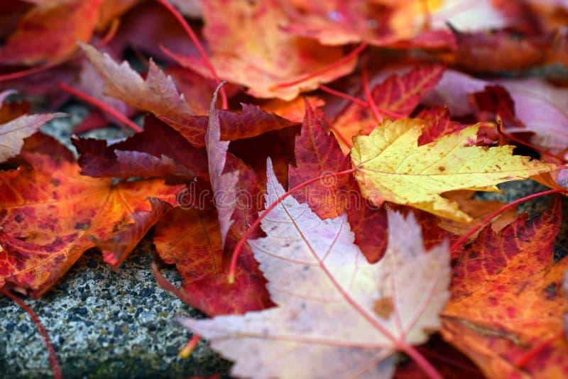 Gefallener Autumn Leaves auf Pflasterung stockfotos