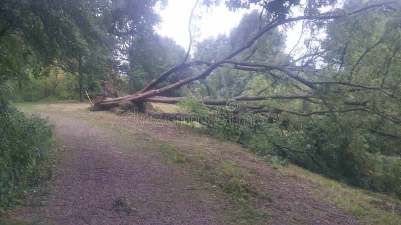 Gefallener Baum stockfotos