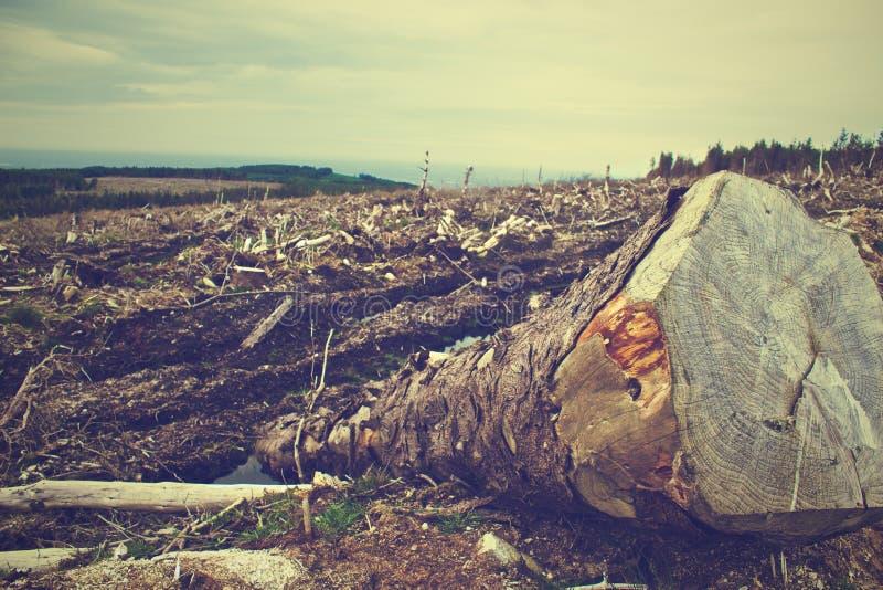 Gefallener Baum auf dem geklärten Landschaftsgebiet stockfoto
