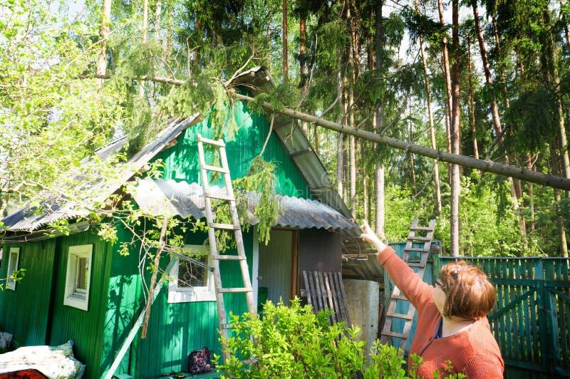 Gefallener Baum auf einem Holzhaus nach einem Hurrikan, in einem gezierten Wald im Land, fallender Baum nach Sturm stockfotos