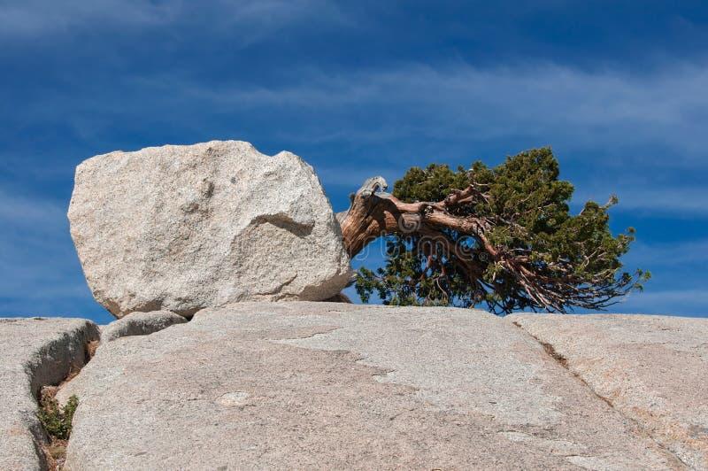 Gefallener Baum auf einem Steinhügel in Yosemite lizenzfreies stockfoto