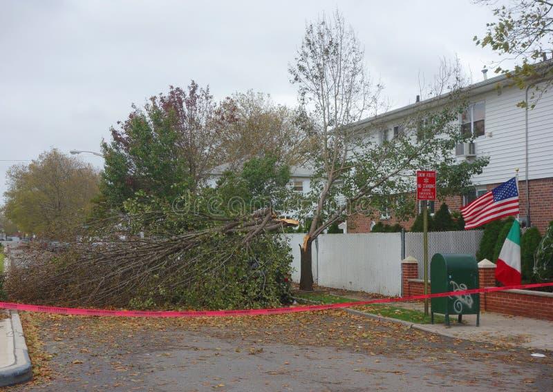 Gefallener Baum beschädigte Haus in der Zeit nach Hurrikan Sandy in Brooklyn, New York lizenzfreie stockbilder