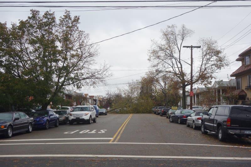 Gefallener Baum beschädigte Haus in der Zeit nach Hurrikan Sandy in Brooklyn, New York stockbild