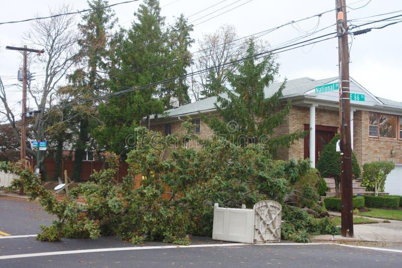 Gefallener Baum beschädigte Haus in der Zeit nach Hurrikan Sandy in Brooklyn, New York stockfoto