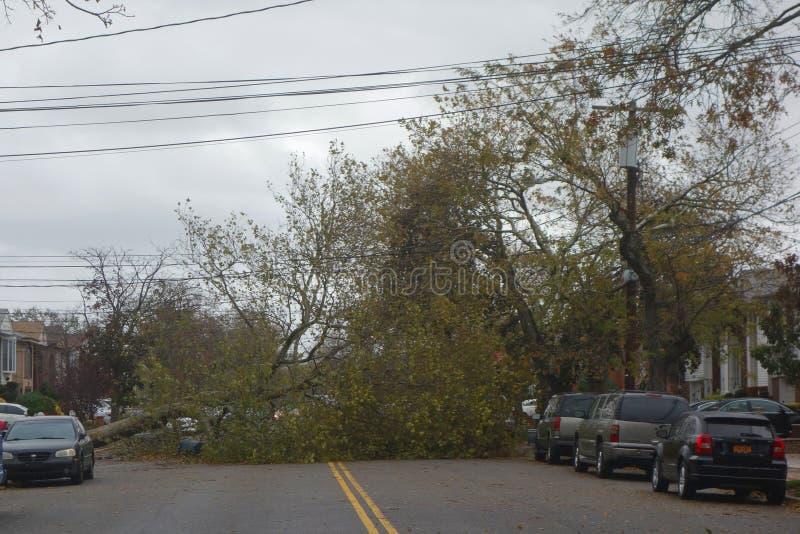 Gefallener Baum beschädigte Haus in der Zeit nach Hurrikan Sandy in Brooklyn, New York lizenzfreies stockfoto