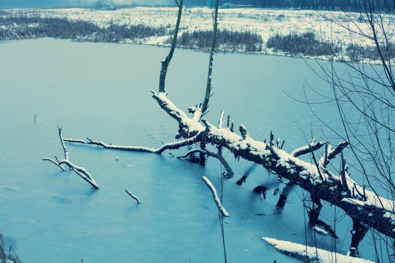 Gefallener Baum in gefrorenem See stockfotografie