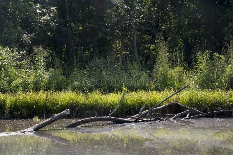 Gefallener Baum im Teich stockbilder