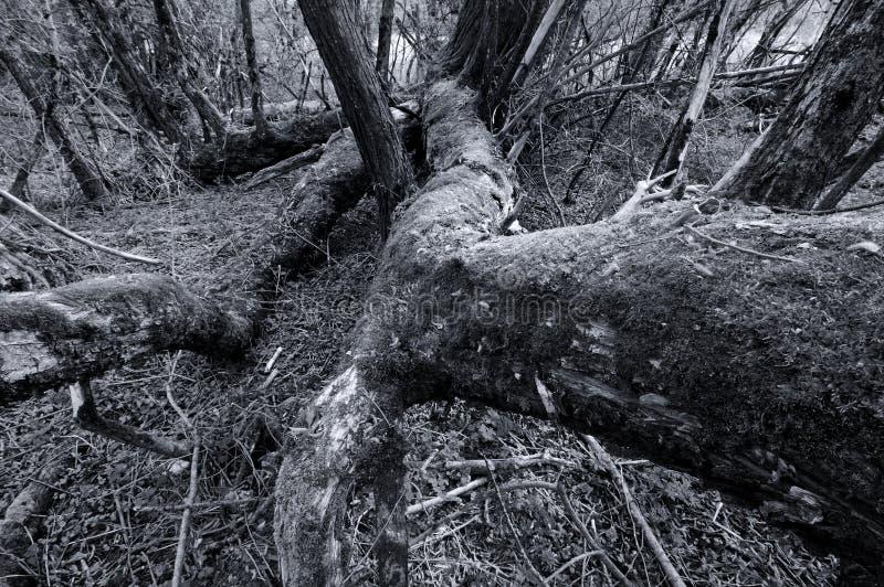 Gefallener Baum im Wald lizenzfreie stockfotos