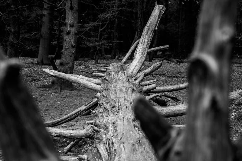 Gefallener Baum an Kaapse-Holz lizenzfreie stockfotografie