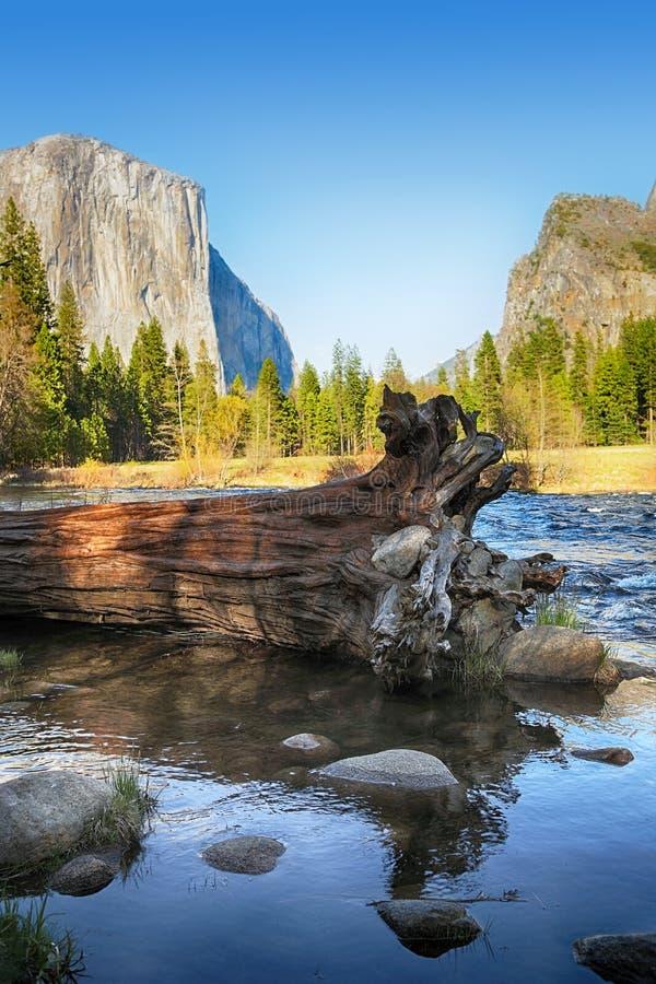 Gefallener Baum in Merced-Fluss lizenzfreie stockbilder