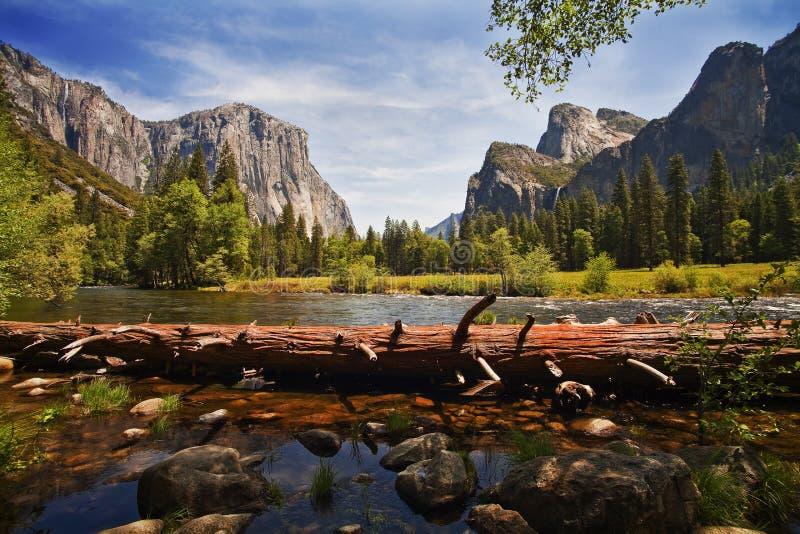 Gefallener Baum, Merced-Fluss, Yosemite-Tal lizenzfreie stockfotografie