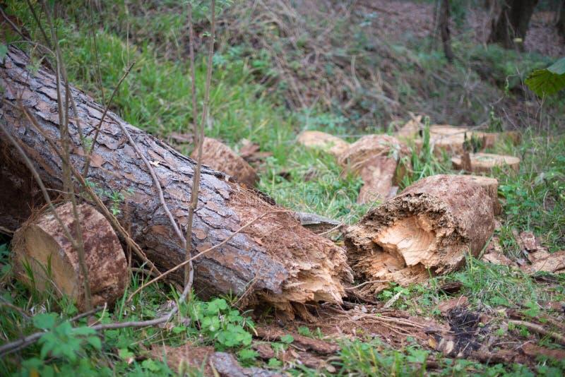 Gefallener Baum nach Sturm lizenzfreie stockfotos