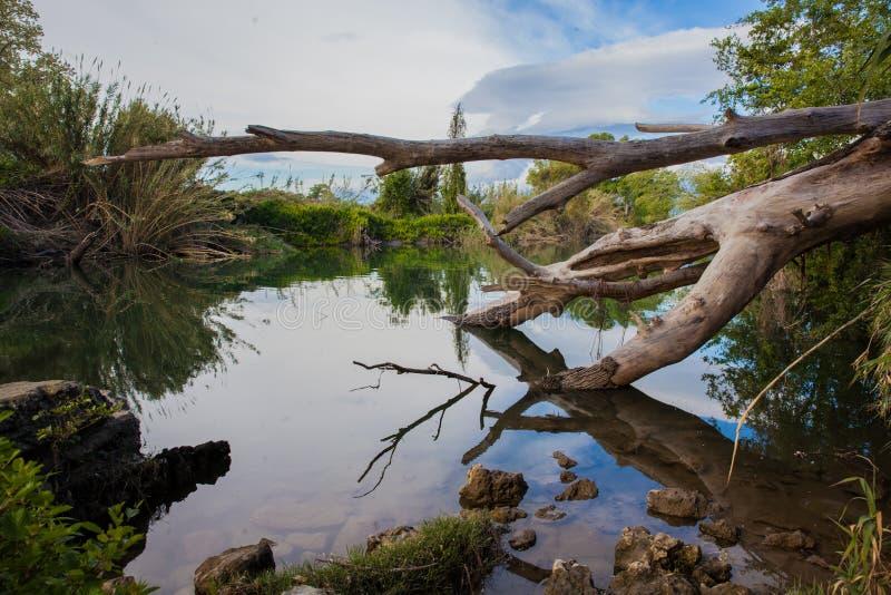 Gefallener Baum spiegelt vom Wasser wider stockfoto