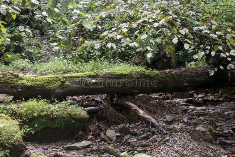 Gefallener Baum und kleiner Strom lizenzfreies stockfoto