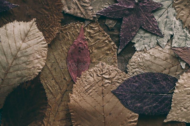 Gefallener Herbstblathintergrund Bunte Blätter Hintergrund und Beschaffenheit für Design Schließen Sie herauf Ansicht des Herbstl lizenzfreie stockbilder