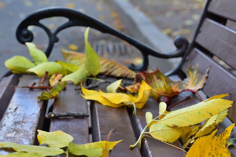 Gefallener Herbstlaub auf einer Bank im Park lizenzfreies stockfoto