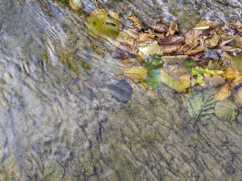 Gefallener Herbstlaub im seichten Wasser von einem Fluss mit Schiefer erreicht einen Tiefstand lizenzfreies stockfoto