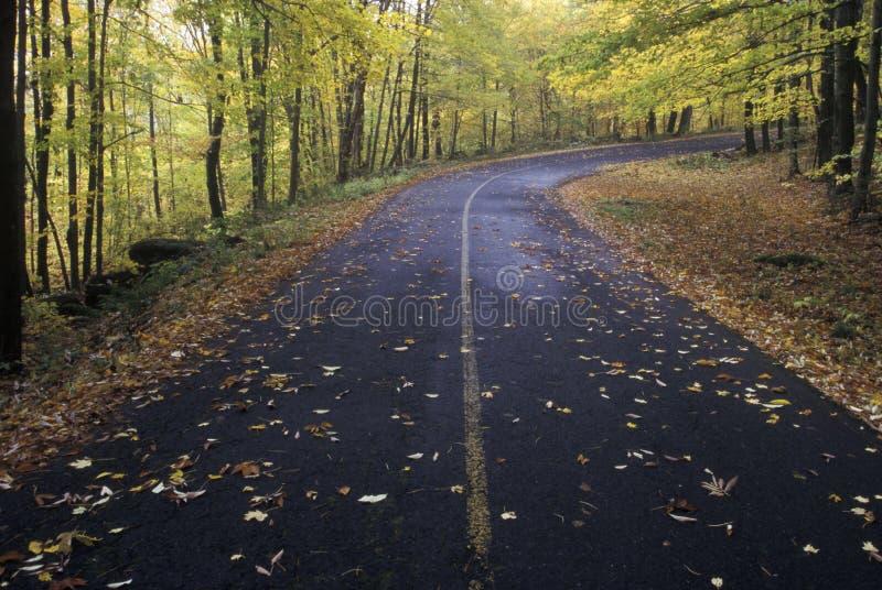 Gefallener Herbstlaub legt auf einen Waldweg in der Greylock-Zustands-Reservierung, Massachusetts stockfotografie