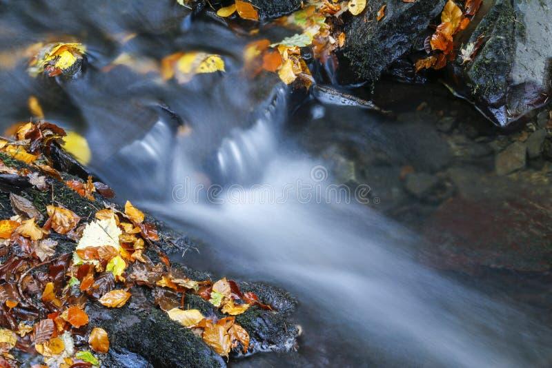 Gefallener Herbstlaub neben Waldstrom stockfotografie