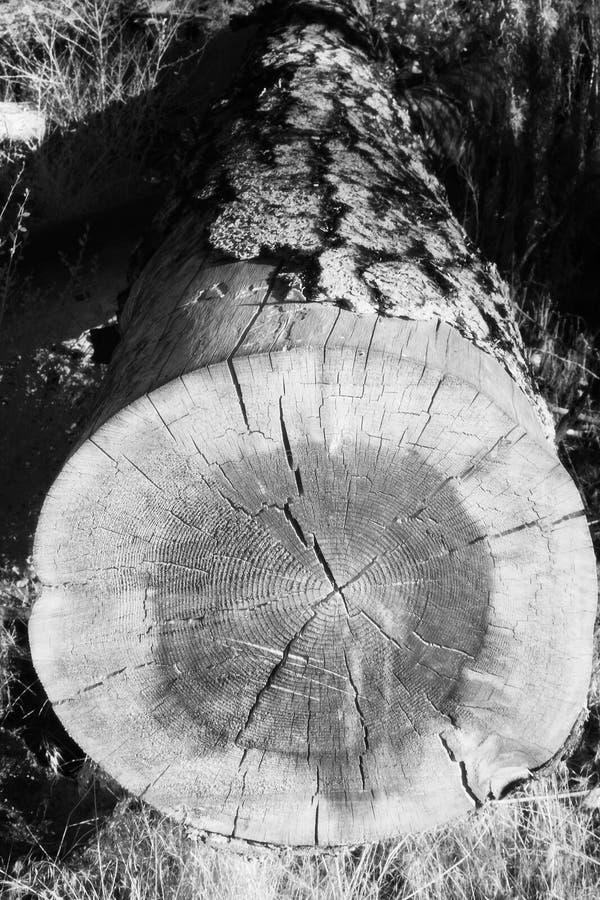 Gefallenes Baum-Infrarot 2 stockfotografie