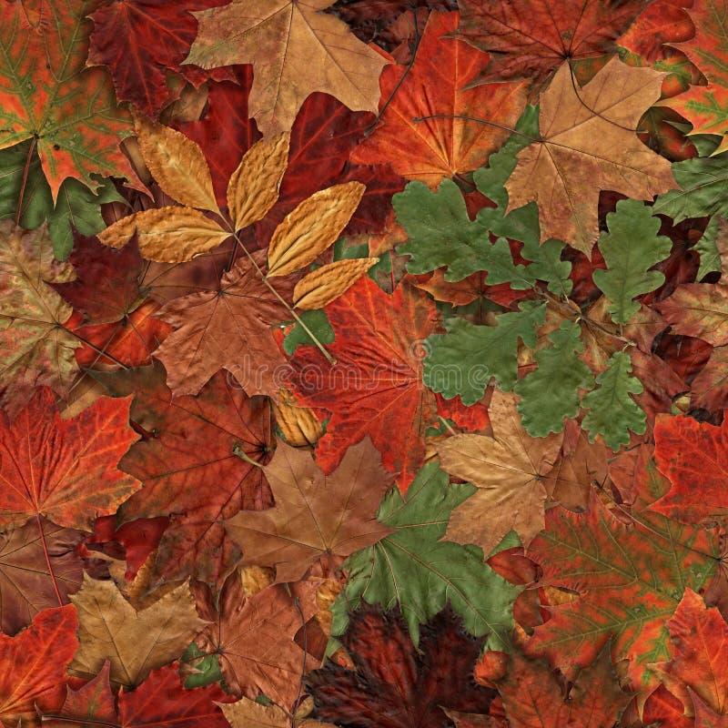 Gefallenes Gelb-roter und grüner Autumn Leaves Background Muster des Herbstlaubs nahtloses 2 stockfoto